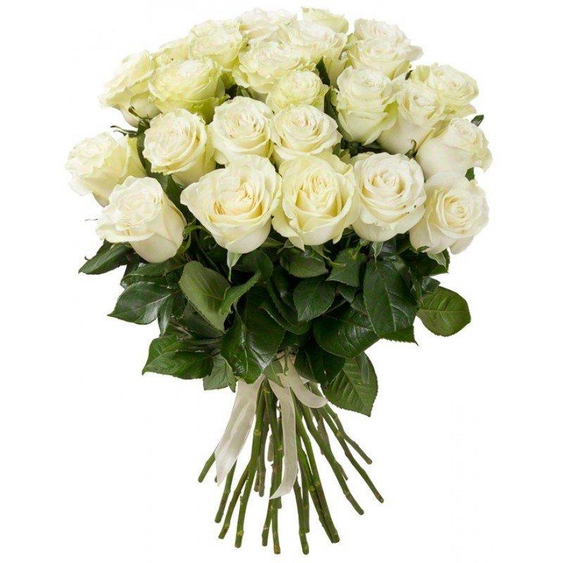 25 белых роз (60 см)