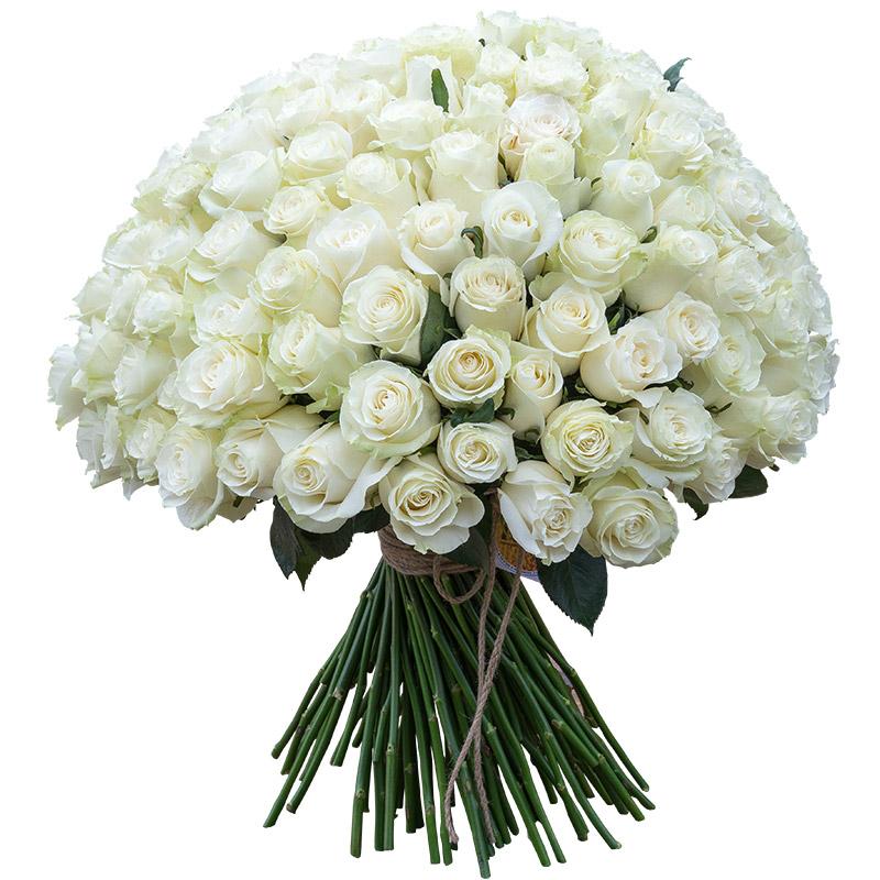 81 белая роза